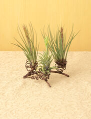 Copper Wire Air Plant Stand