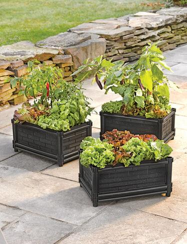 Veg Box™