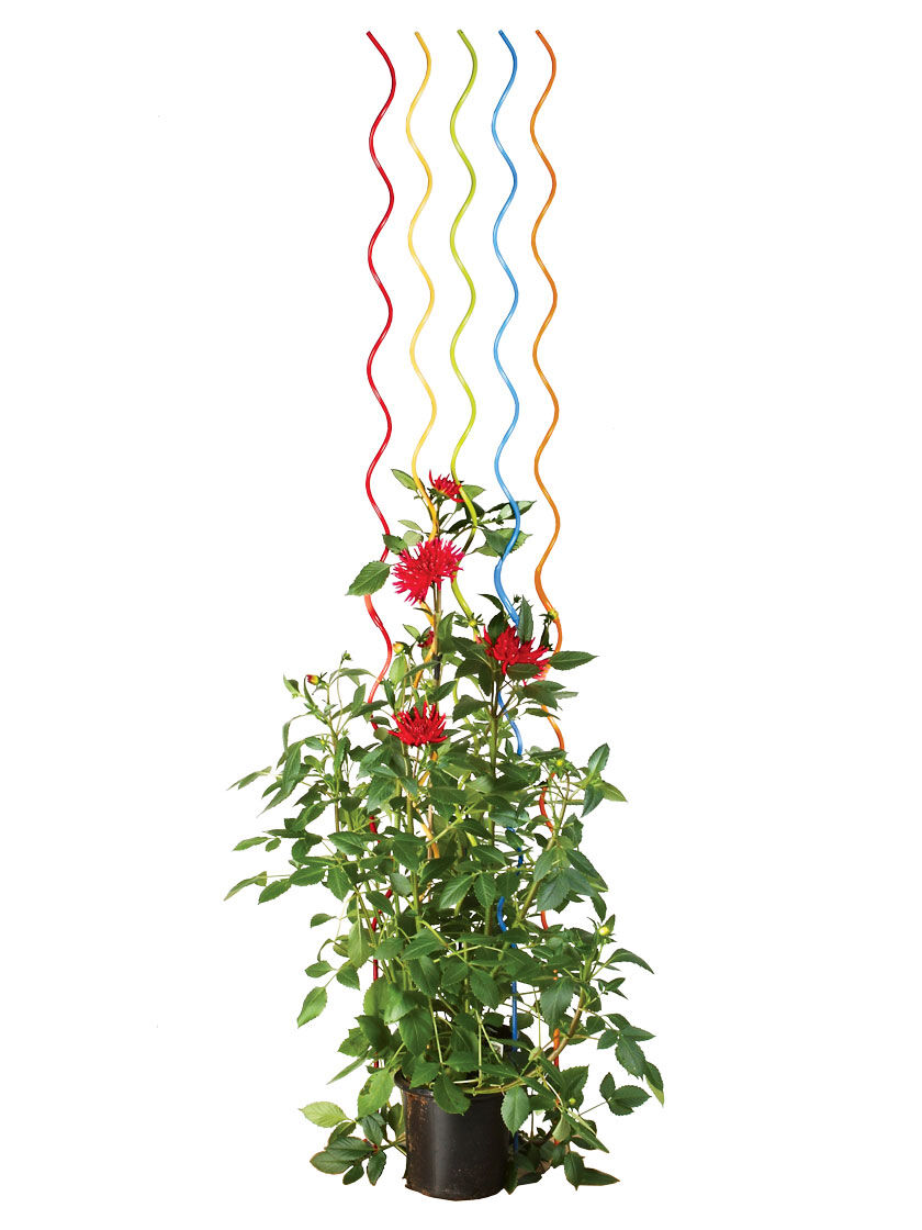 Tomato Stakes - Rainbow Spiral Plant Supports   Gardeners.com