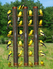3-Tube Finch Feeder
