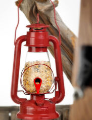 Hurricane Lantern Bird Feeder