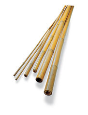 #6 Bamboo Poles, Set of 50