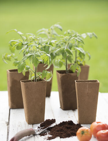 Ultimate Biodegradable Tomato Pots, Set of 6