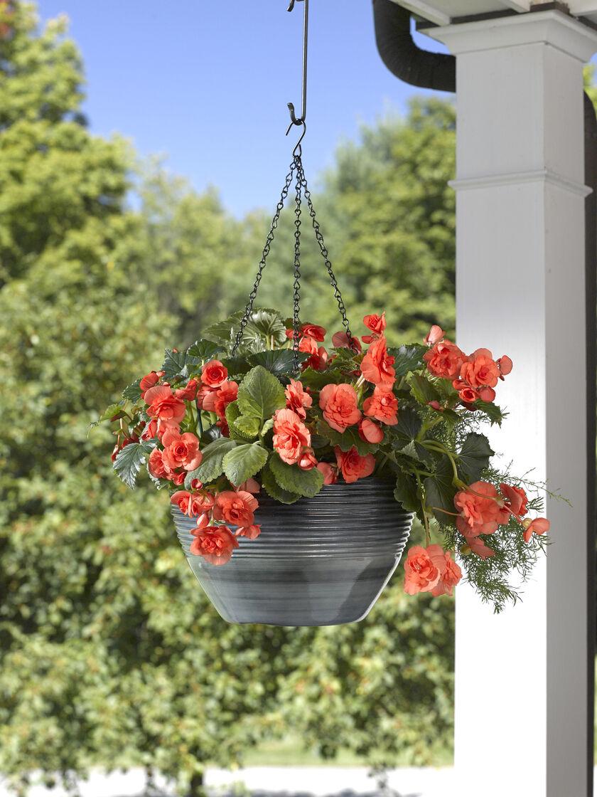 hanging baskets sedona hanging flower baskets. Black Bedroom Furniture Sets. Home Design Ideas
