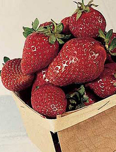 Tristar Strawberries, 25 Plants