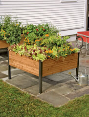 4' x 4' Elevated Cedar Planter Box