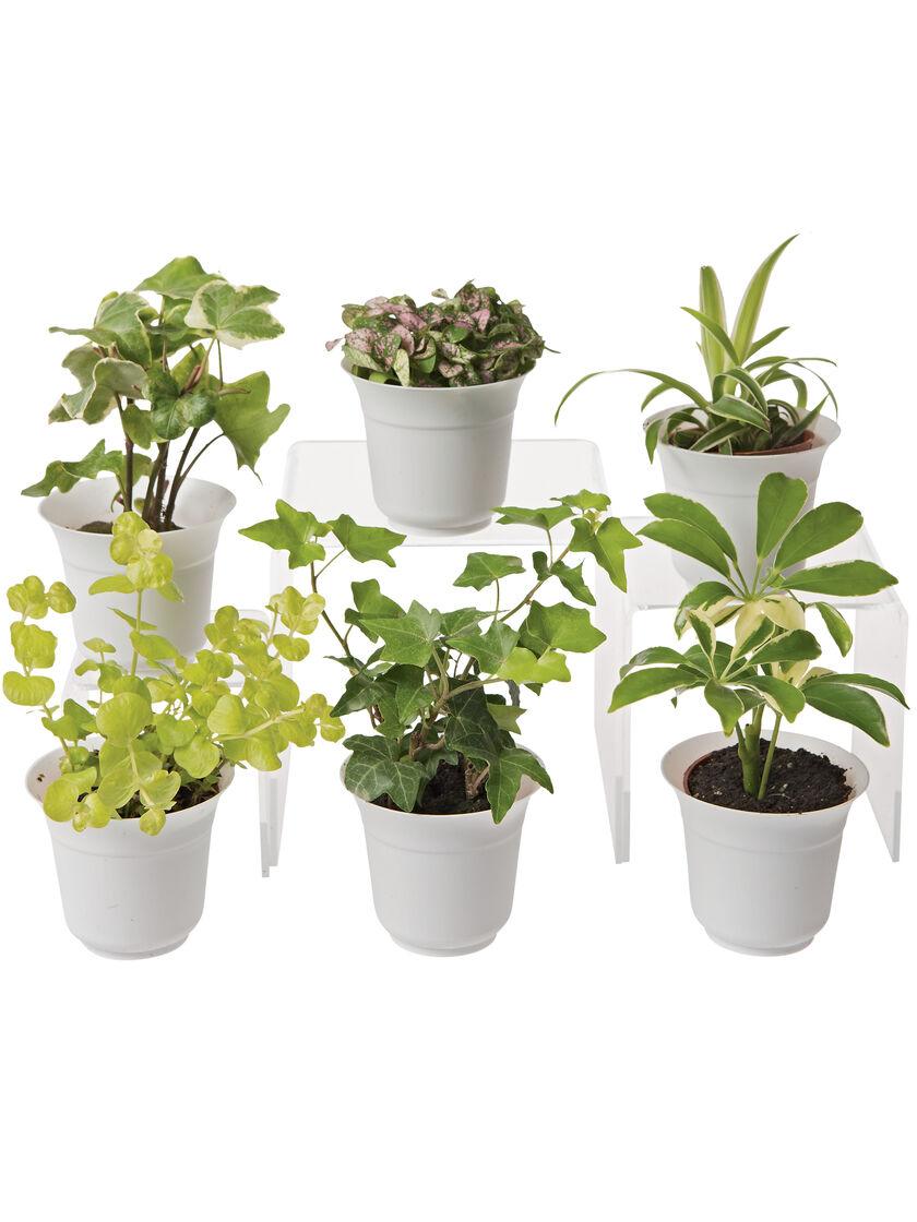 Low light terrarium plant collection set of 6
