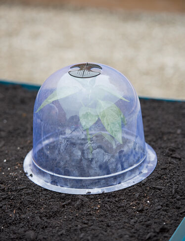 Medium Garden Cloches, Set of 6