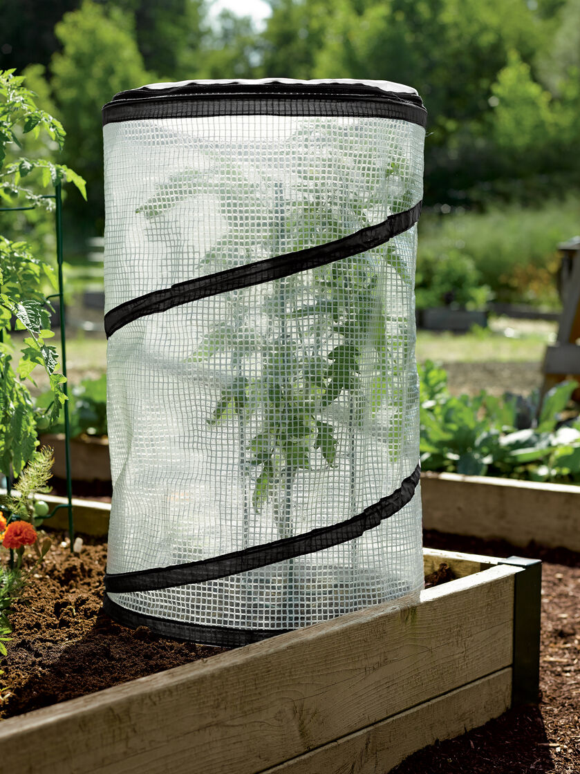 Pop Up Tomato Accelerator Mini Growhouse Gardeners Com