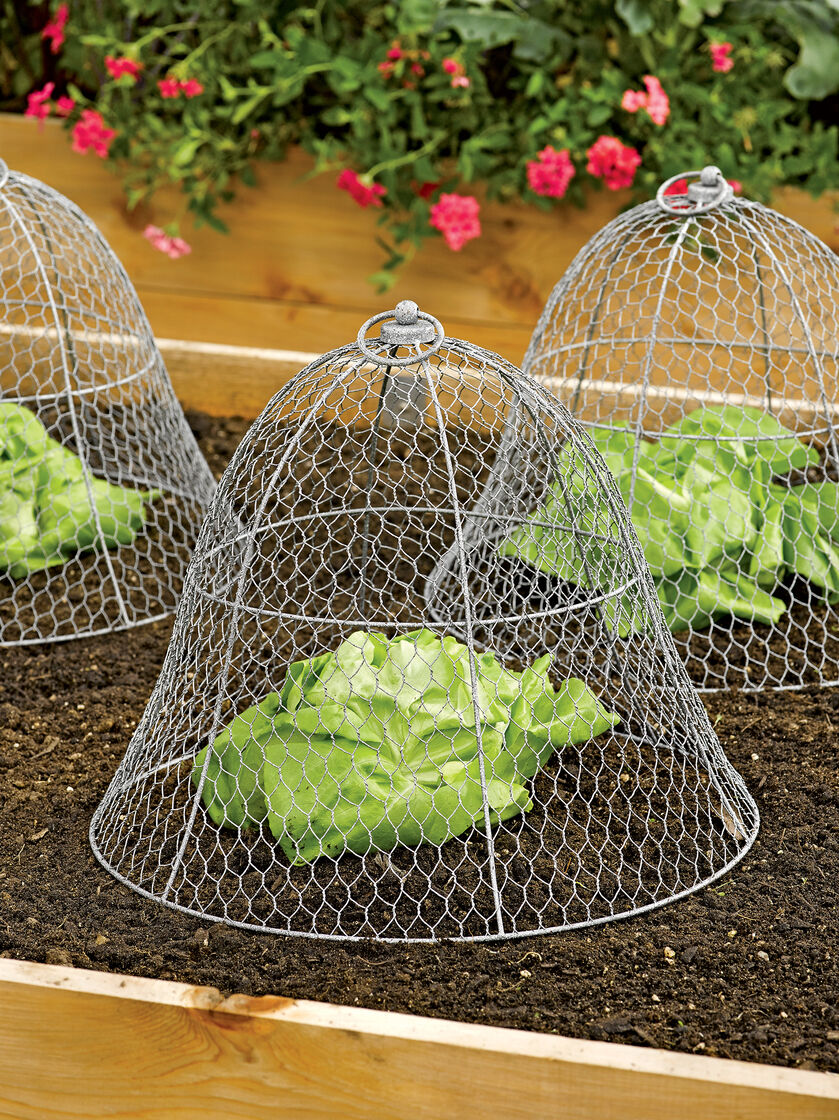 Wire Cloche by Colonial Tin Works Gardeners Supply