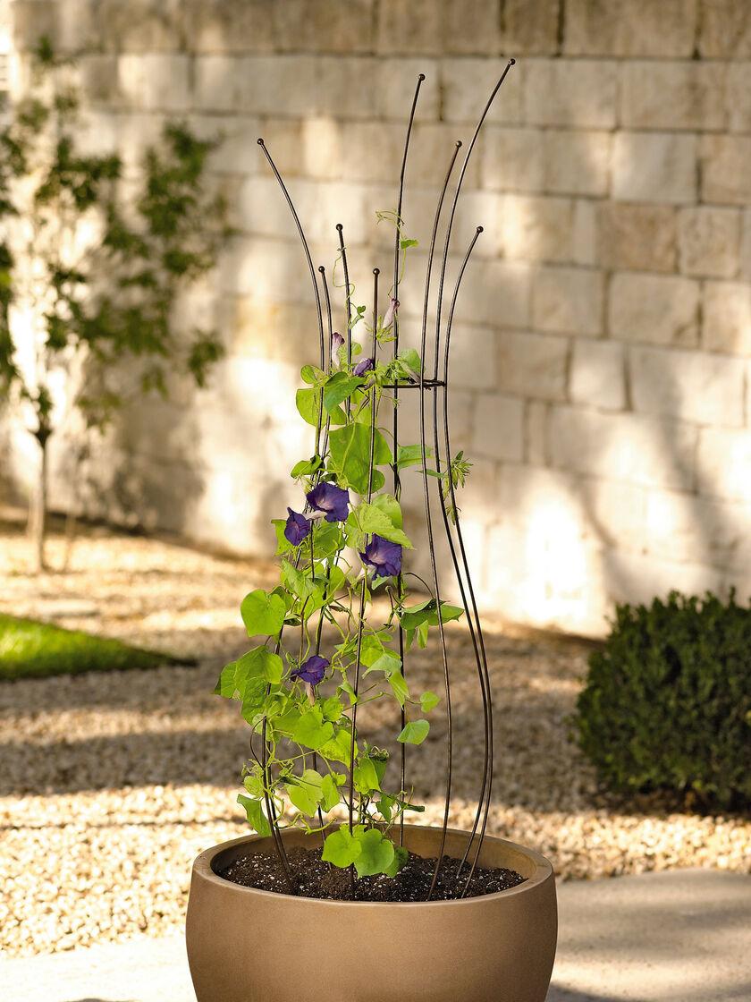 Planter trellis pot trellis powder coated steel for Jardin quand planter