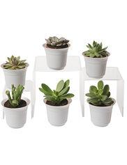 succulent-terrarium-plants
