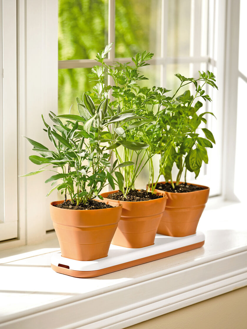 Kitchen Garden In Pots Herb Pots Windowsill Herb Garden Planter Gardenerscom
