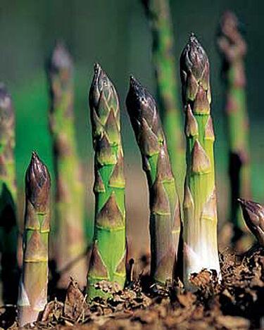 good planting asparagus Part - 5: good planting asparagus pictures