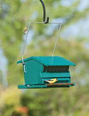 Absolute Squirrel-Proof Bird Feeder