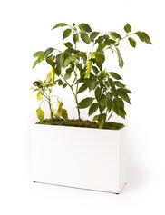 Countertop Hydroponic Planter