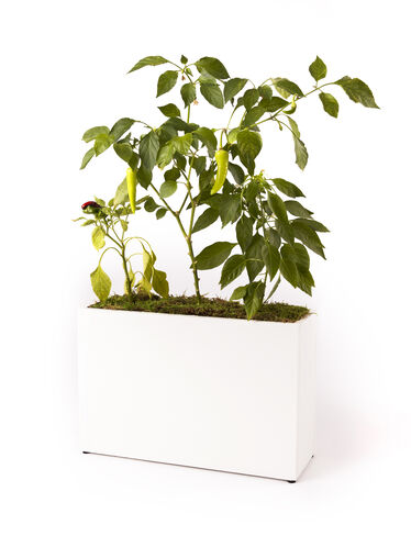 Countertop Hydroponic Planter with Timer Gardeners.com
