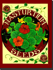 Nasturtium Seed Pack Outdoor Art