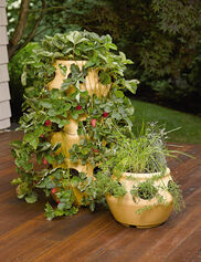 Strawberry & Herb Planter