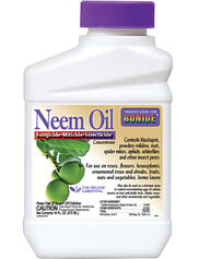 Neem Oil Concentrate, 1 Pint