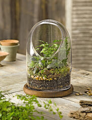 Glass Oval Top Terrarium