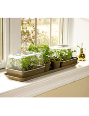 Kitchen Garden Propagator