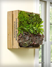 Wine Crate Wall Garden