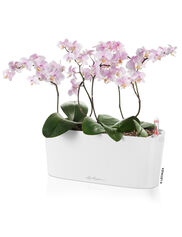 Delta 10 Self-Watering Windowsill Planter, Small