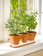 Convertible Herb Pot Set