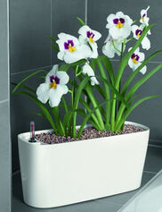 Delta 20 Self-Watering Windowsill Planter, Medium