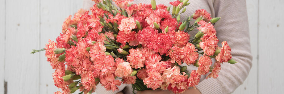 Dianthus (Sweet William)