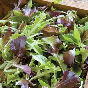Gourmet Lettuce Mixes