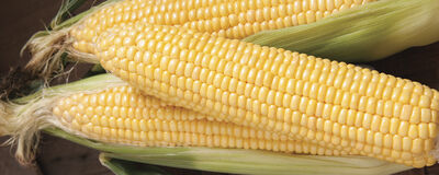 Sweet Corn: Grow a Summertime Tradition