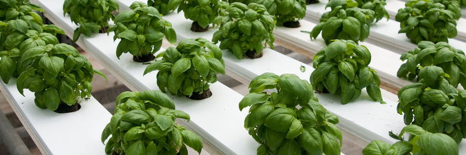Hydroponic Performers