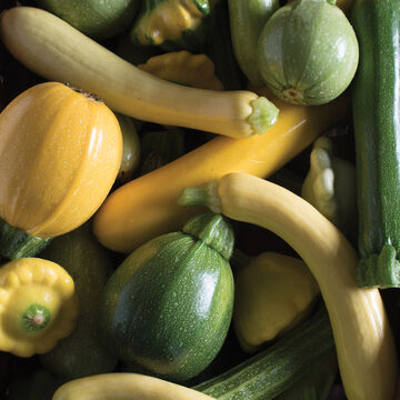 Exquisite Summer Squash