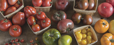 Grow Tomatoes with Old-World Character
