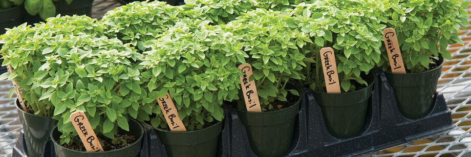 Sale Herbs