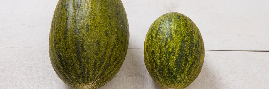 Piel de Sapo Melons