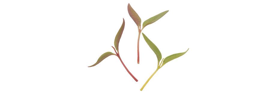 Microgreen Flowers