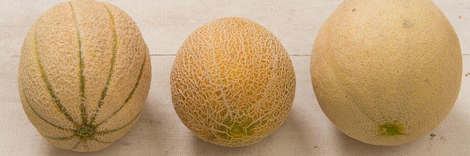 Cantaloupe (Muskmelon)