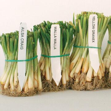 Convenient Starter Plants