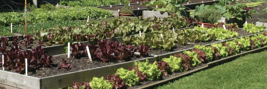 Johnny's Top Picks for Your Garden