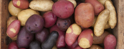 Now Shipping: Johnny's Potatoes