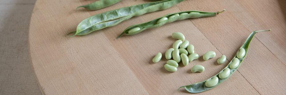 Fresh Shell Beans