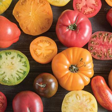 Premium Tomatoes