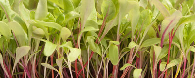 Johnny's: Microgreens Specialists Since 2001