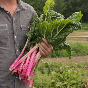 Workhorse Swiss Chard
