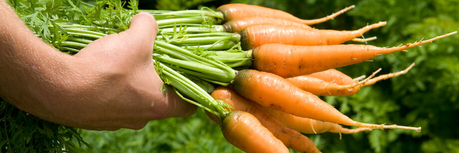 Early Carrots