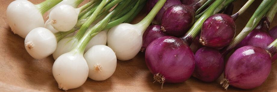 Mini Onions