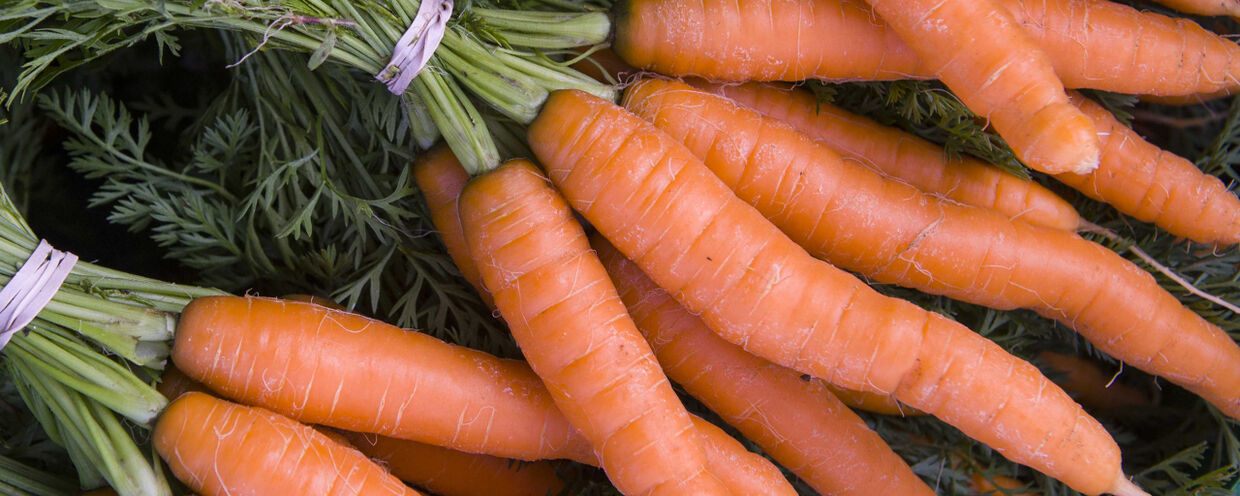 Choice Carrots for Summer & Fall Sowing